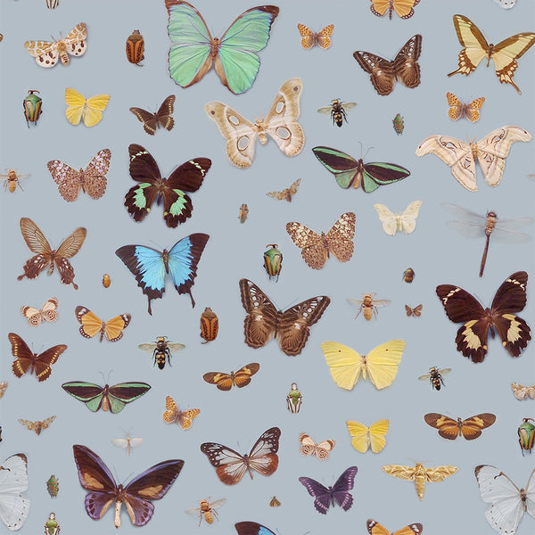 Bugs and Butterflies Design