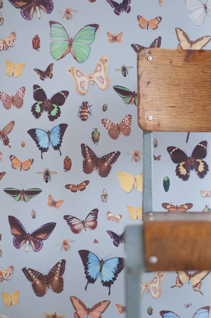 Bugs and Butterflies wallpaper