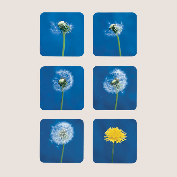 Dandelion coasters set of 6