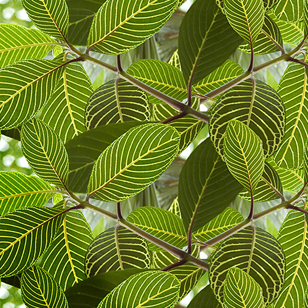 Safari Leaf wallpaper