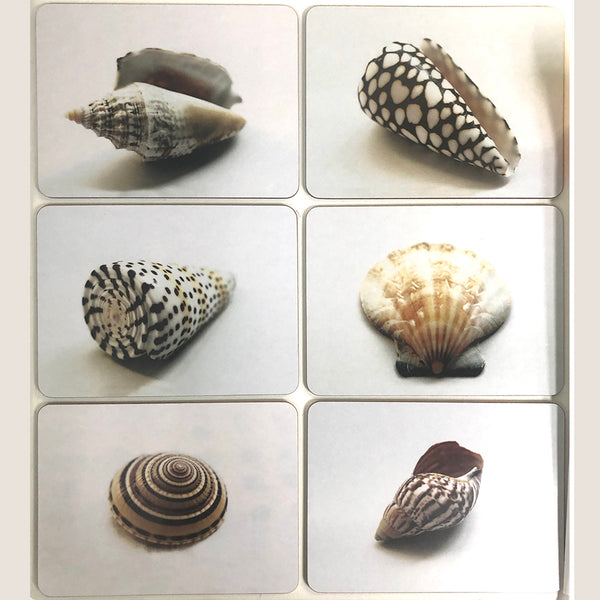Shells placemats set of 6