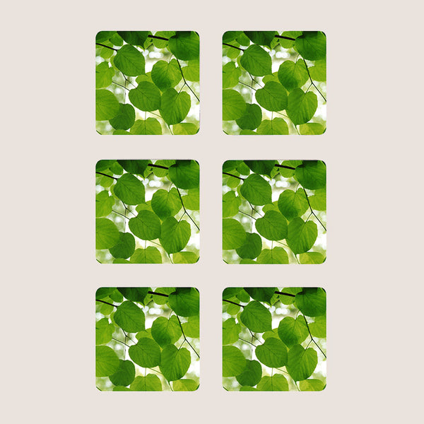 Sunlight through leaves coasters set of 6