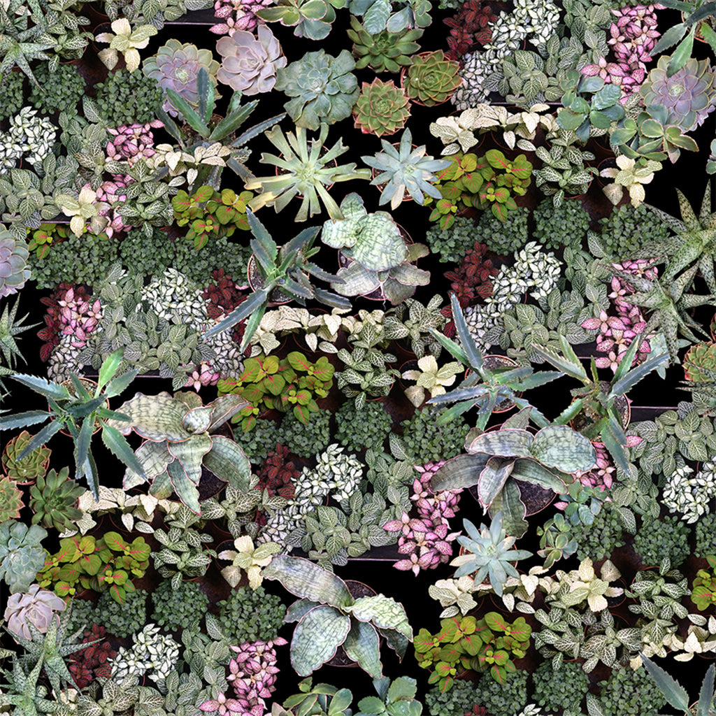 Surreal Succulent Wallpaper Ella Doran