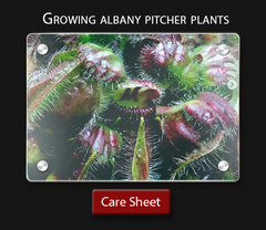 Carnivorous plant care sheet How to grow albany pitcher plants Cephalotus follicularis