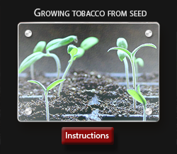 Instructions:  How to grow tobacco from seeds * Cultivo Carnivores, South Africa