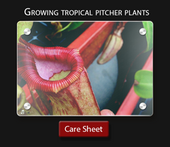 Carnivorous plant care sheet  How to grow tropical pitcher plants Nepenthes