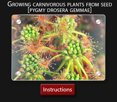 Cultivo Carnivores instruction sheet  How to grow carnivorous plants from seed.png