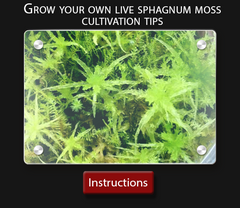 Cultivo Carnivores growing instructions How to grow your own live sphagnum moss culture