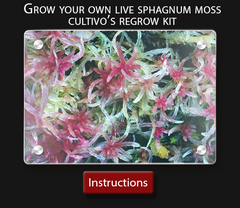 Cultivo Carnivores growing instructions help on growing your own live sphagnum moss culture
