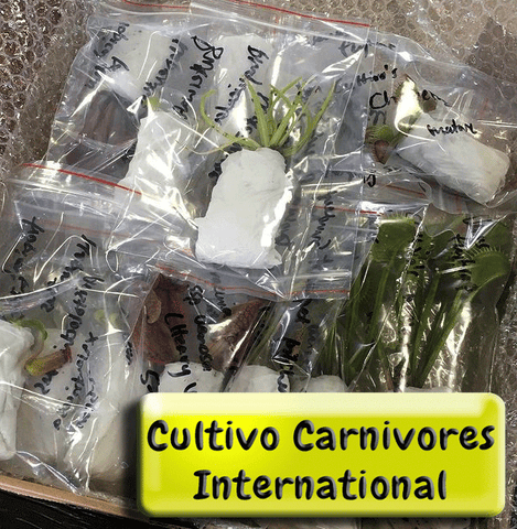Carnivorous plant export shipping details for international customers