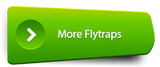 All Flytraps - Shop by Category - Cultivo Carnivores