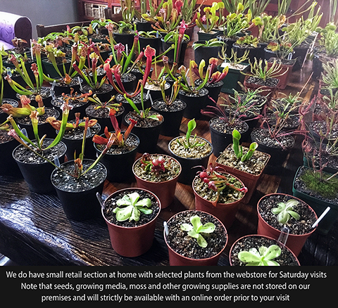 Retail section with selected carnivorous plants at Cultivo Carnivores, South Africa