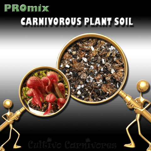 PRE-MIXED GROWING MEDIA:  PROmix for Cobra Lilies (Darlingtonia Californica) for sale | Buy carnivorous plants and seeds online @ South Africa's leading online plant nursery, Cultivo Carnivores