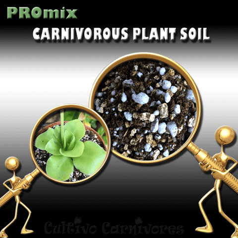 PRE-MIXED GROWING MEDIA:  PROmix for Mexican Butterworts (Pinguicula) for sale | Buy carnivorous plants and seeds online @ South Africa's leading online plant nursery, Cultivo Carnivores