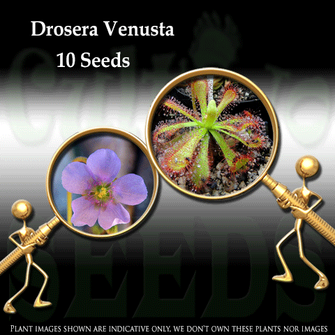 SEEDS: Sundew > Drosera Venusta for sale | Buy carnivorous plants and seeds online @ South Africa's leading online plant nursery, Cultivo Carnivores