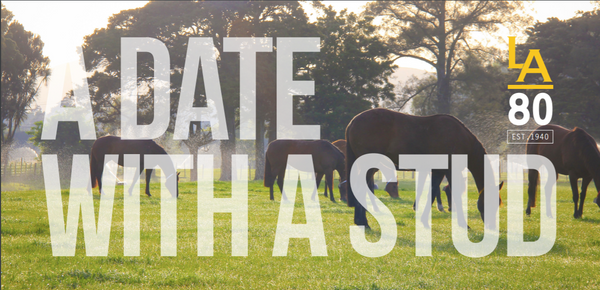 A Date with a Stud at the Little Avondale Stud