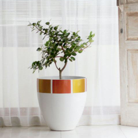 Egg Planter Designer Pots Gold, White and Copper, Outdoor and Poolside Planting