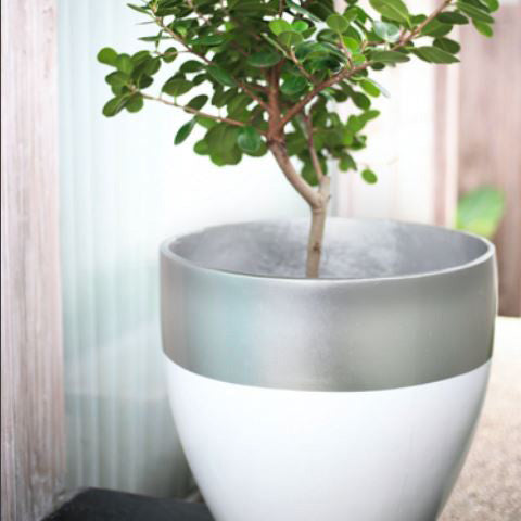 Egg Planter Designer Pots Silver and White, Outdoor Sculpture and Poolside Planting - Spa Living