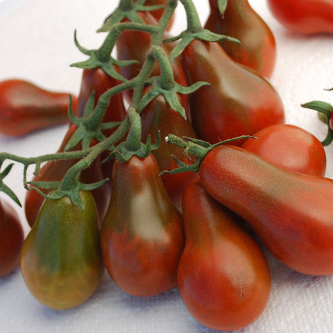 *On sale Feb.19* Tomato Plant - Chocolate Pear (2 plants)