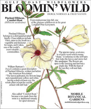Botanical Art Class-Spring Wildflowers of the Longleaf