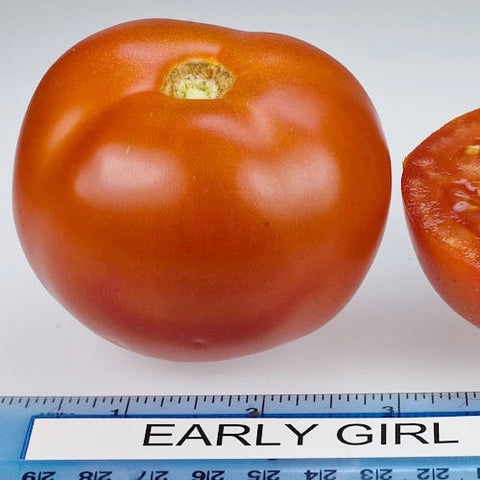 *On sale Feb.19* Tomato Plant - Early Girl (2 plants)