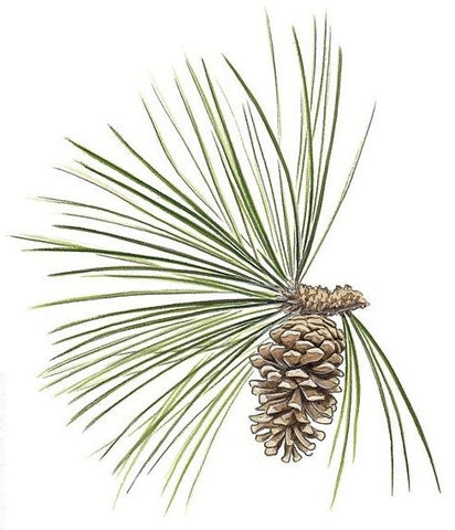 America's First Industry - Longleaf Pine and the Historic Naval Stores Industries