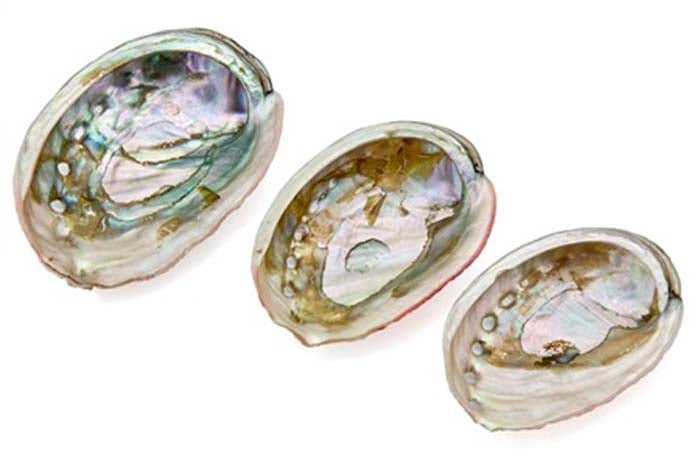 "3 Pieces Red Abalone Shell Set - 1.75"", 2"", 2.5""L"
