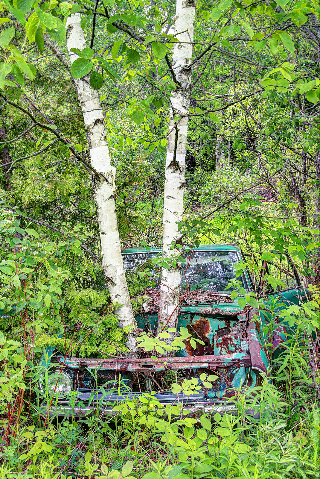 """ Car Sprouts Trees""  - Photo Art - CreativeCollection"