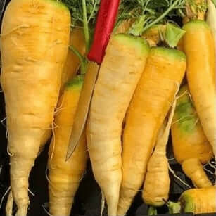 Gaia Organic Seeds - Yellowstone Carrot