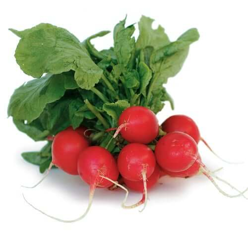 Juniper Farms- Fresh Red Radishes