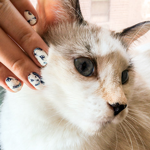 Image showing cat nails next to the cat they were made from.