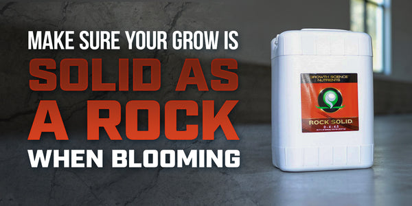 Make sure your grow is solid as a rock when blooming