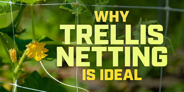 Why trellis netting is ideal