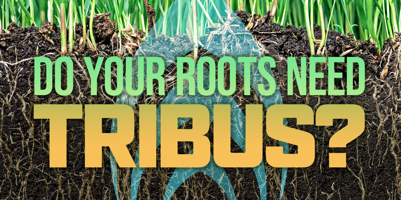 Do your roots need Tribus?
