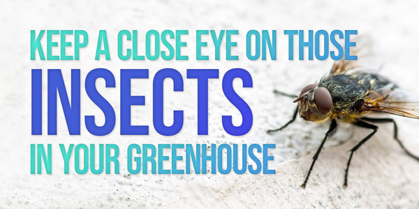 Keep a close eye on those insects in your greenhouse