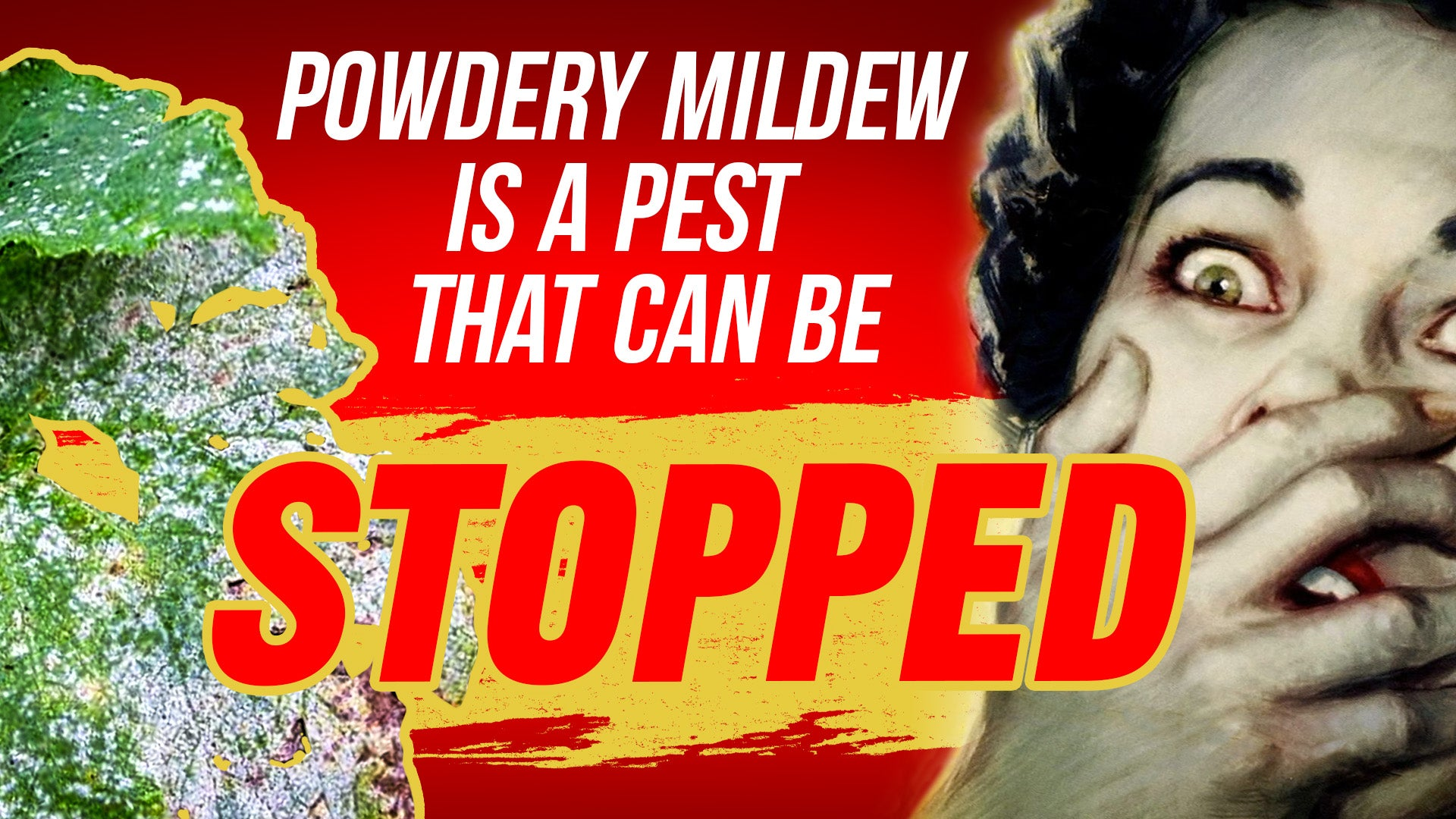 Powdery mildew is a pest that can be stopped