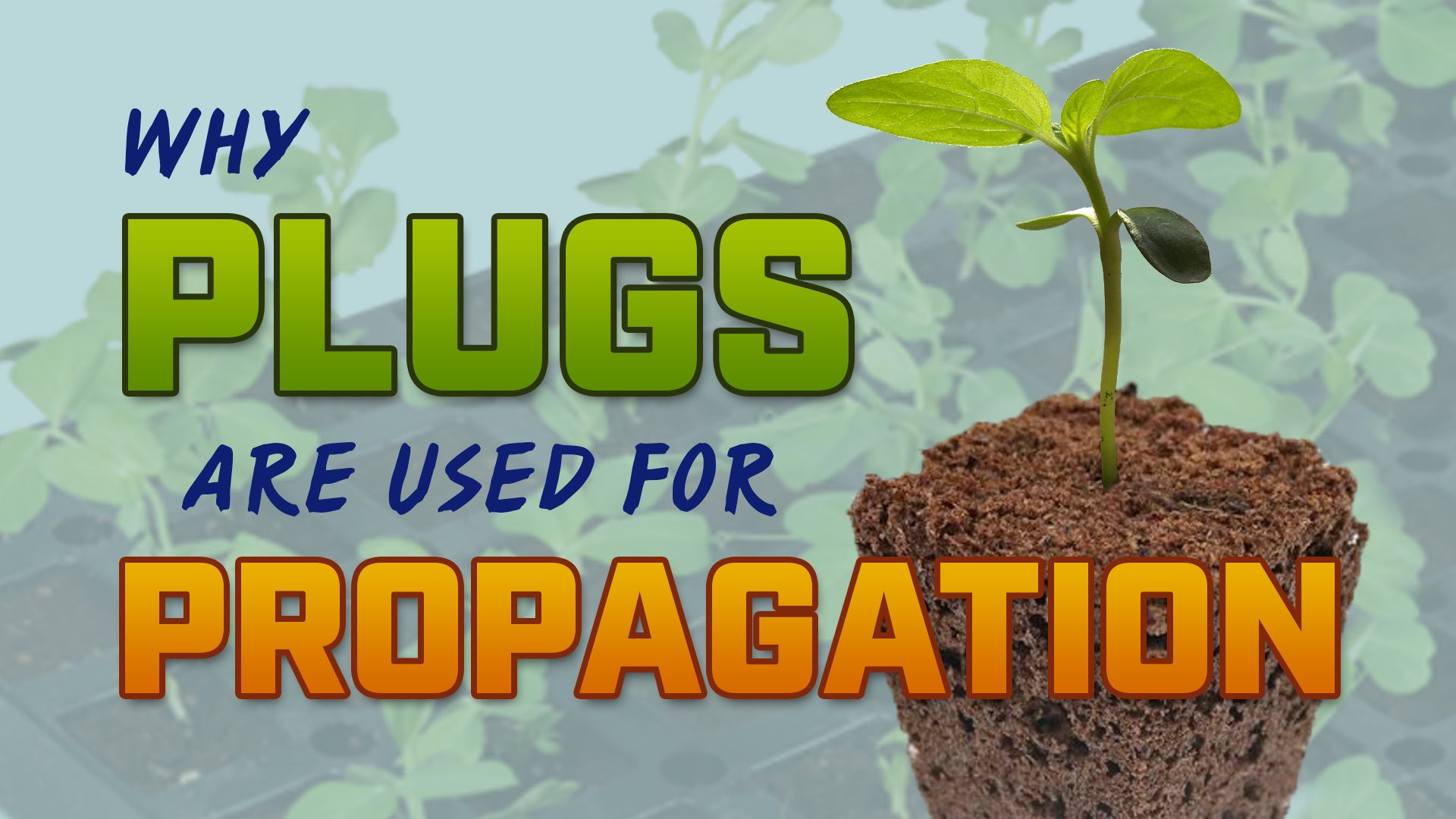 Why plugs are used for propagation