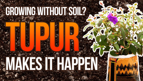 Growing without soil!? Tupur makes it happen