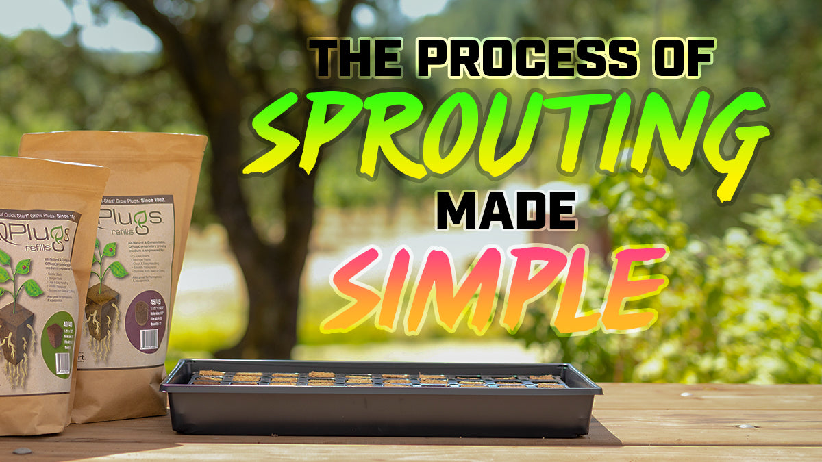 The process of sprouting made simple!
