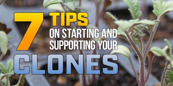 7 tips on starting and supporting your clones!