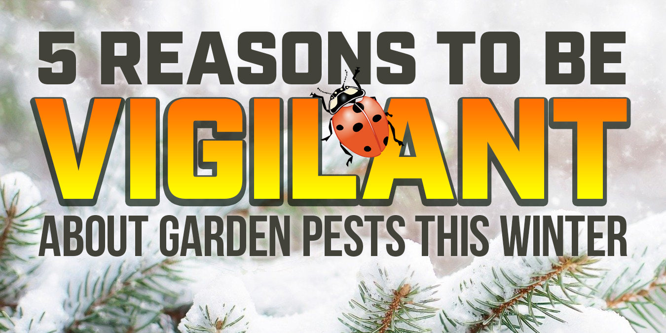 5 reasons to be vigilant about garden pests this winter