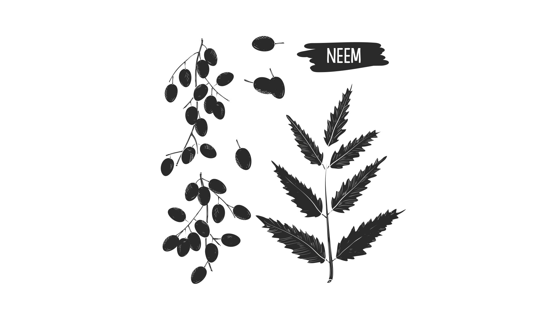 3 Reasons Why Neem Kernel Cake is the Organic Grower's Best Friend
