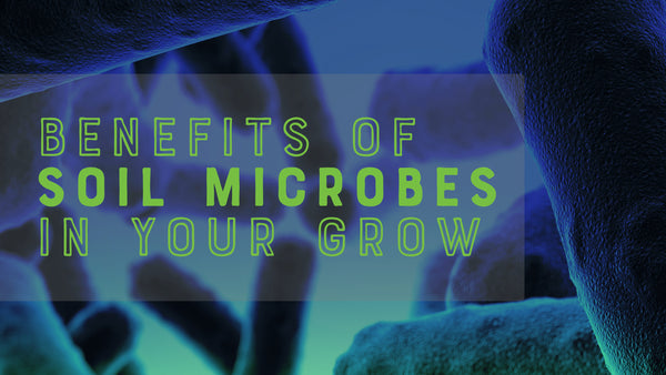 Benefits of Soil Microbes in Your Grow