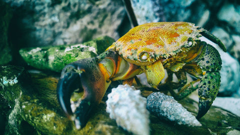 Crabs are crustaceans and their shells make an excellent nutrient source for plants!