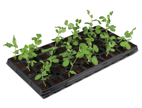 iHort propagation tray with sprouts