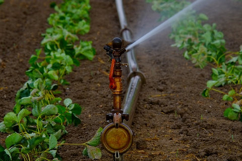 Irrigation in a field