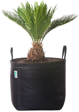 GeoPot fabric pot with a sprouting tree.