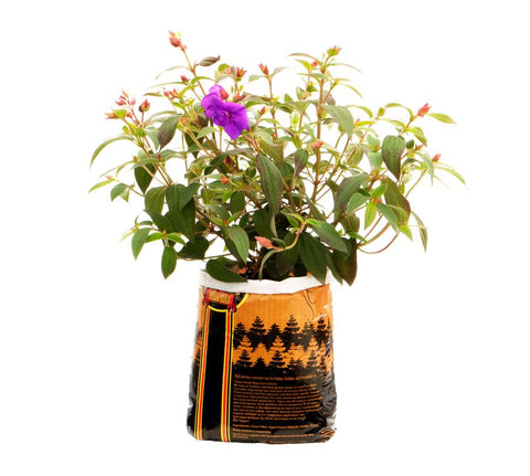 Plant growing in tupur bag