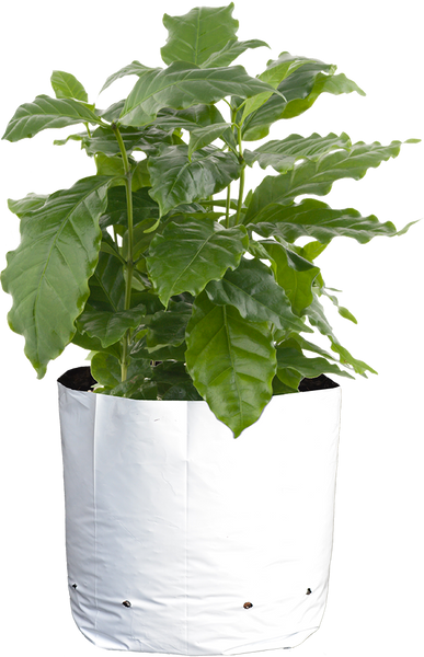 Sungrower Supply - Black and White Grow Bag - Left Coast Wholesale - Left Coast Wholesale