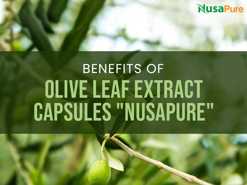 Benefits of olive leaf extract capsules